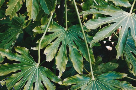 green plant leaves textured in the garden in summer