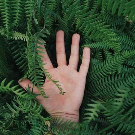 hand touching plants in autumn in the nature Stok Fotoğraf