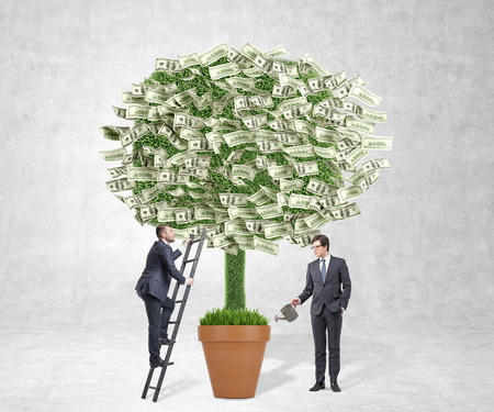 watering pot: Businessman watering pot with money tree, another businessman climbing ladder to tree. Concrete background. Concept of profit.