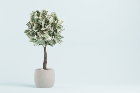 Small dollar tree is growing in a white pot standing in a blue room. Concept of money investment and an income growth. Mock up