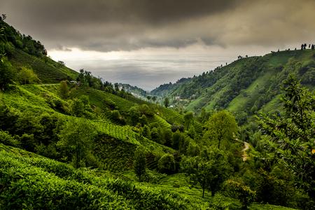 Tea plantation landscape, Rise Turkey Stok Fotoğraf - 82077558