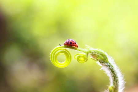 lady bug is walking down photo