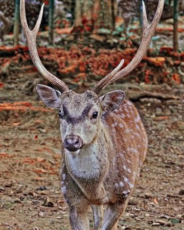 deer  spot: deer with white spot