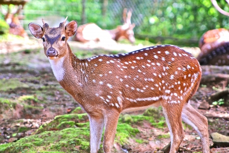 deer  spot: deer with white spots