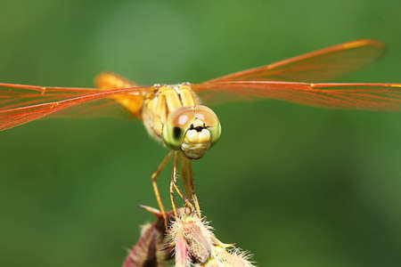 small world: dragon fly in yellow color Stock Photo