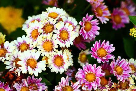 Beautiful Indonesan flowers
