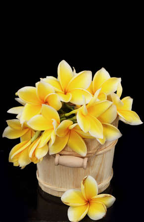 flowers of Indonesia