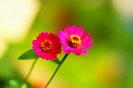 Indonesian flower Stock Photo