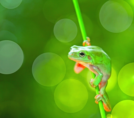 green frog, isolated on green photo