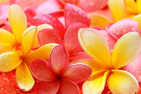 Bali flower Foto de archivo