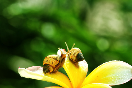 snails on yellow flower