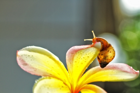land slide: snails, macro photography Stock Photo