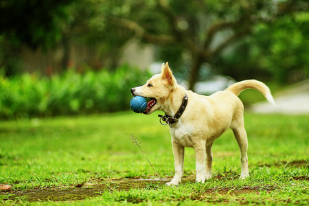 fetch: dog playing with a ball