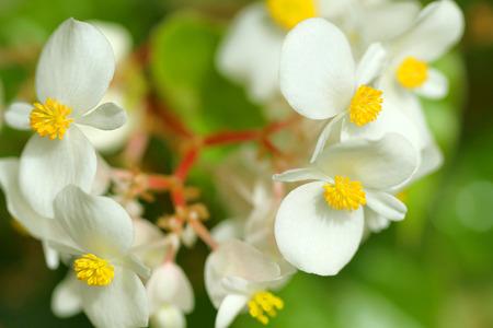 Beautiful Indonesian flowers Stock Photo