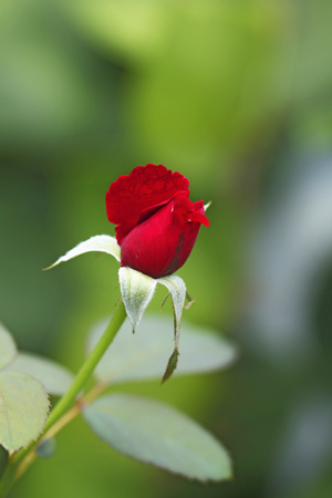Beautiful flowers of Indonesia