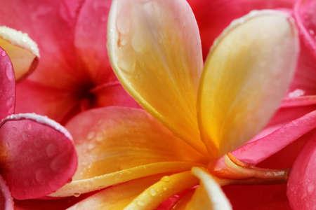 Bali Flowers Stock Photo