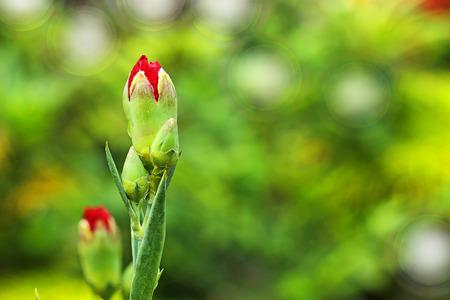 flowers in the garden photo