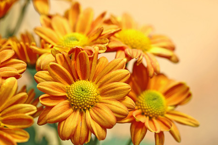 flowers in the garden, isolated on blur background photo