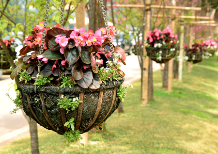 Pink flower hanging basket Stock Photo