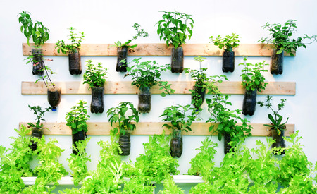 Growing vegetables on the wall. Imagens