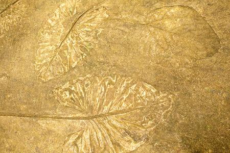 The Imprint leaf on cement floor background,ground texture background