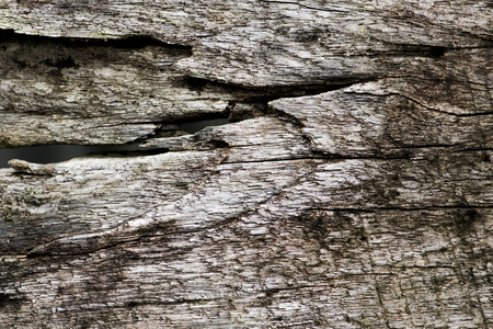Texture of old wood background Stok Fotoğraf