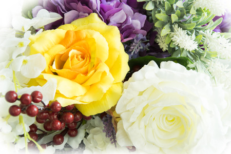 white rose and yellow rose flower background.
