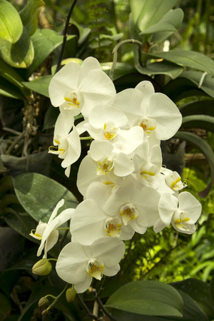 Beautiful white orchids flower in garden