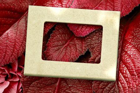 创造性的布局由有白色框架的叶子制成。顶视图。自然概念。