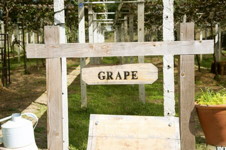 Wooden sign, grape vineyard Archivio Fotografico - 128510658