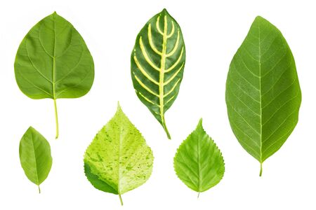 set of green leaf isolated on white background Archivio Fotografico - 129096638