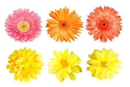 collection Yellow chrysanthemum and collection gerbera isolated on white background.