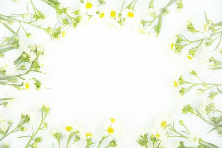 Flowers composition. Border made of daisy white flowers. Flat lay, top view Imagens