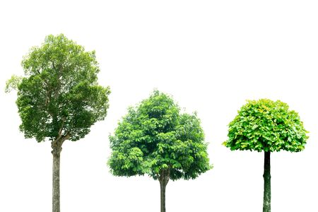 collection of Tree isolated on white background