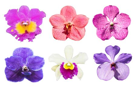 collection purple orchids flower isolated on white background.