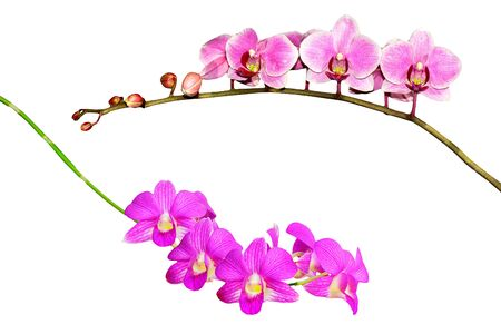 collection of  Purple orchid branch isolated on white background
