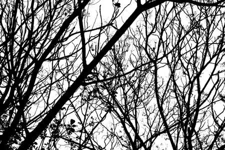 Black and White of Tree branches under the sky 免版税图像