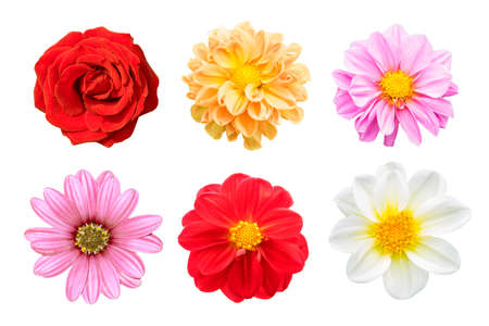 collection mix flower Colorful isolated on white background.