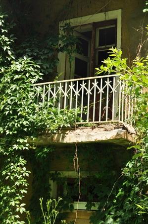 loach: old house overgrown loach