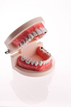 Training dental jaw layout on a white background - image