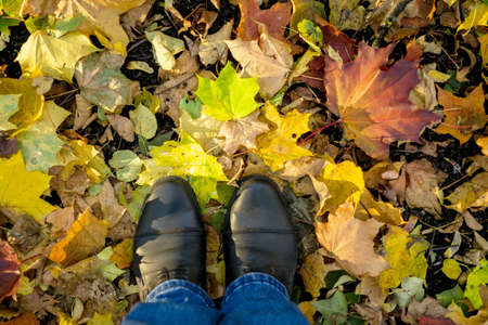 Fall, autumn, leaves, legs and shoes. Conceptual image of legs in boots on the autumn leaves. Feet shoes walking in nature
