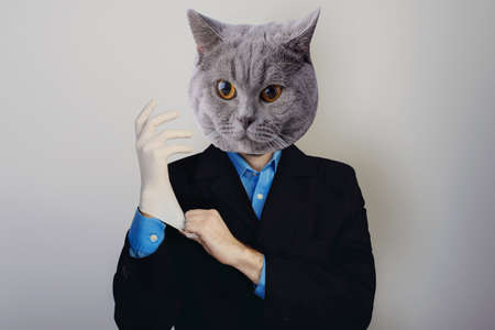 Collage of a man and with a cat head businessman in suit and blue shirt puts on medical glove on gray background