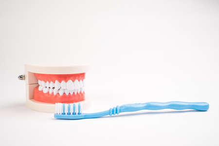 Dental teeth mockup and blue toothbrush on white background. 免版税图像