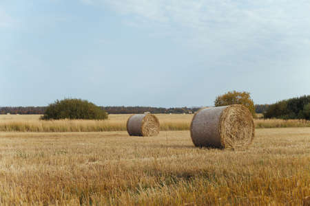 Bales of hay on a farm with summer blue sky background. Standard-Bild