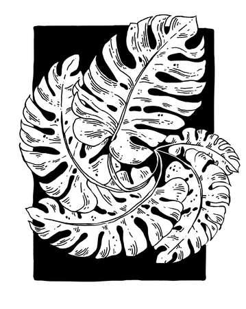 Composition de feuilles de spirale de vecteur isolée Banque d'images - 71357918
