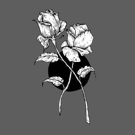 Two black and white roses isolated on grey background