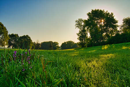 A green field with flowers, trees and sunshine