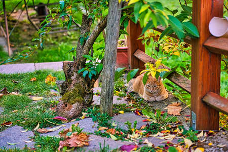 A cat chilling in the evening sun and Autumn-colored wine leafs