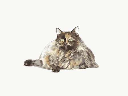 long haired tortoiseshell cat grumpy kitty vector detailed illustration fluffy puffy fat animal purring lazy funny digital drawing