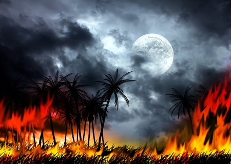 tropical fire photo